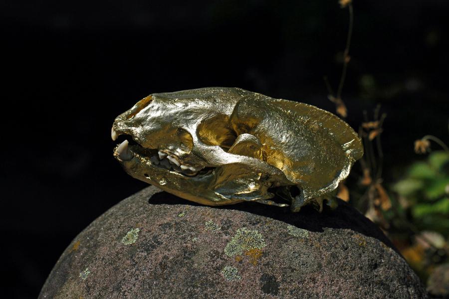 3-goldener Schädel