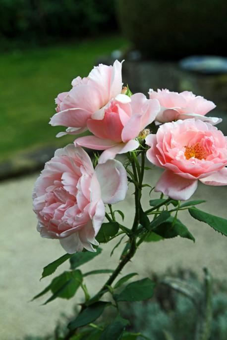 hauptsache keramik eine rose ist eine rose ist eine rose. Black Bedroom Furniture Sets. Home Design Ideas