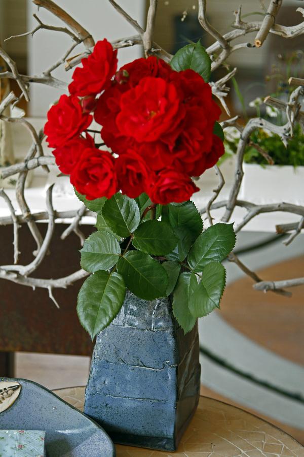 rosenrot