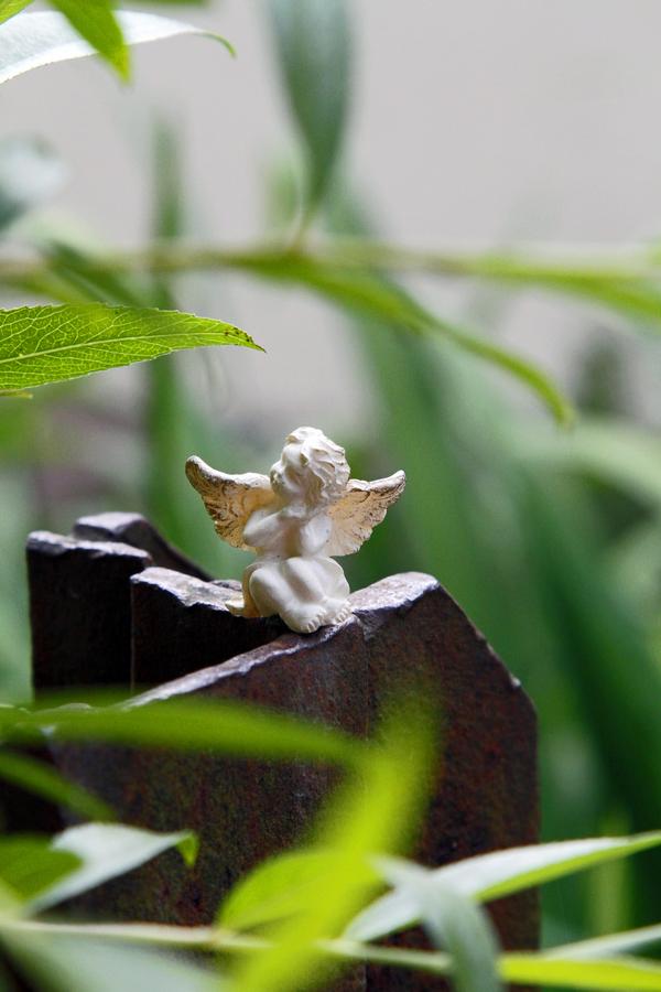 2-engel