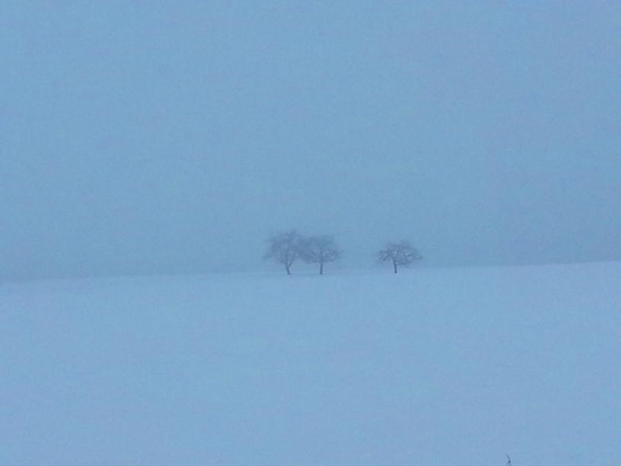 1-nebel