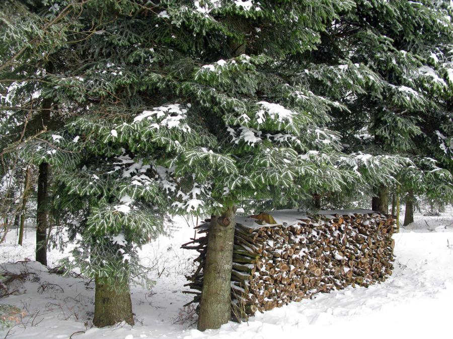 1-brennholz