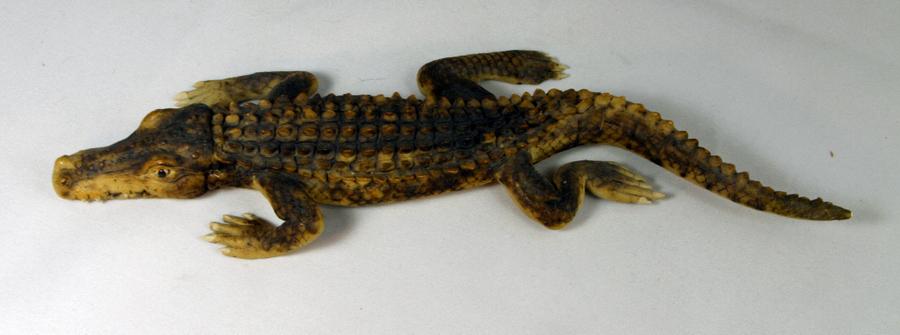 2-krokodil