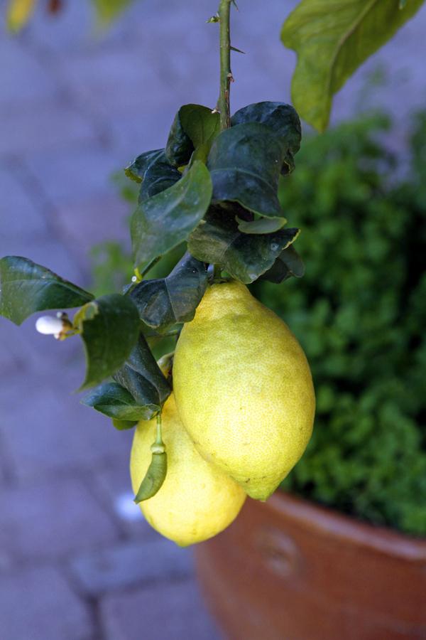 2-citrus
