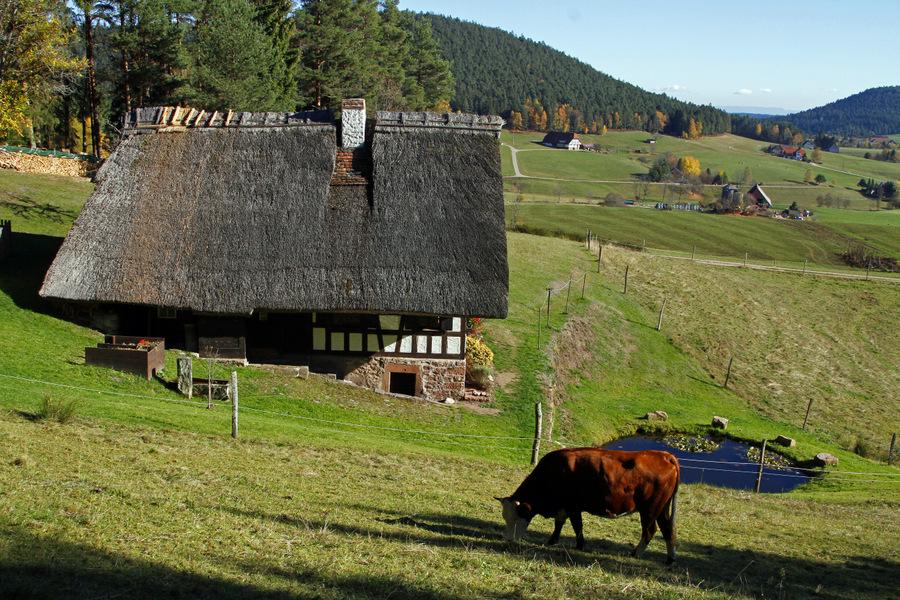 5-kapfhaus