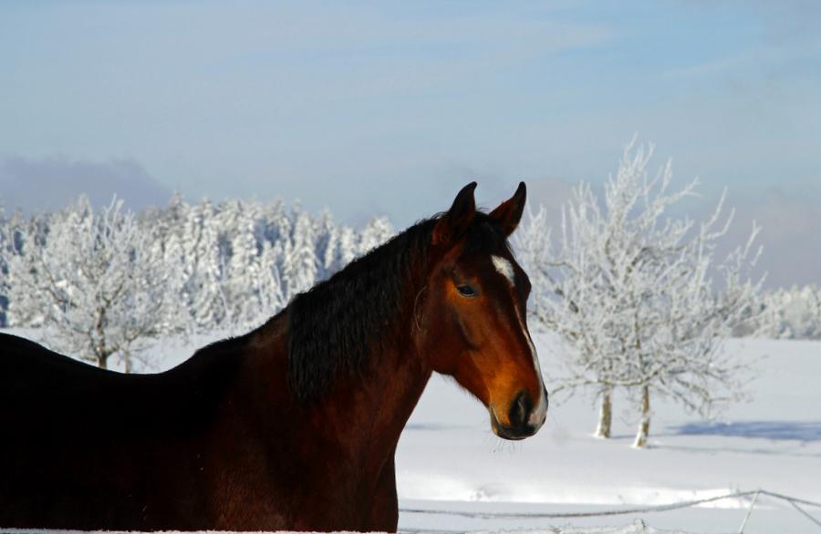 1-pferd