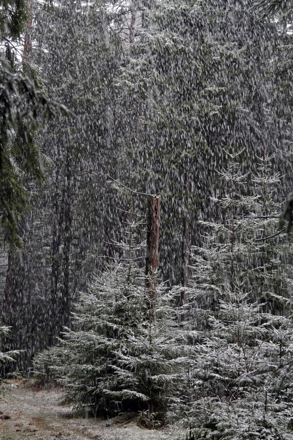 2-schneee